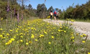 Camino de Santiago de Compostela