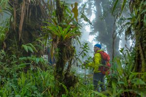Ruta del Rey: Providencia-Londres de Quepos @ Puntarenas, Costa Rica