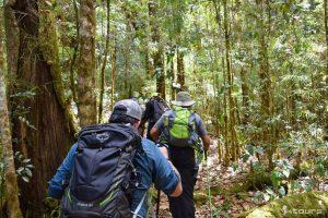 Caminata Savegre - Antenas Cerro de La Muerte